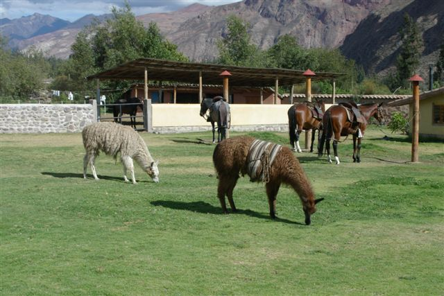 Llamas and Pasos